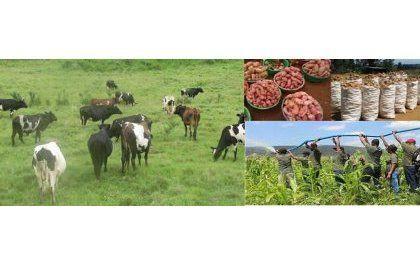 Révolution agricole au Rwanda : Style Kholkhozien ou gros agriculteurs américains ?