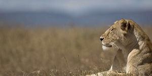 TOURISME : « Appel de Kasane » : Quand les Professionnels du Tourisme Misent sur la Protection de l'Environnement