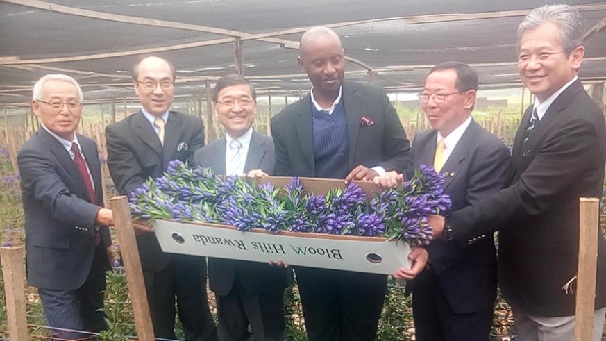 Une entreprise japonaise découvre au Rwanda les terres idéales pour cultiver la gentiane