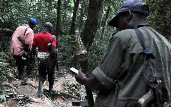 L'armée congolaise capture plus de 1000 rebelles rwandais à Kalehe